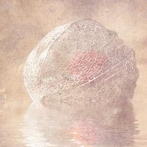 Physalis by Heiko Lehmann