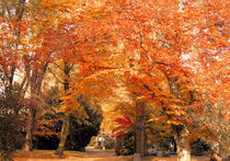 Herbstlicher Weg von Udo Schiffgen