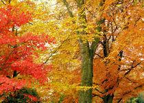 Herbstfarben von Udo Schiffgen