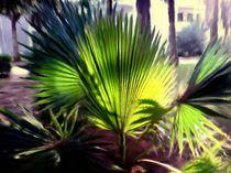 Palme südlicher Flair by Gabriele Nedilka