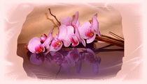 Orchidee von Gabriele Nedilka