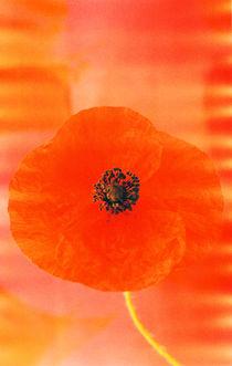 Mohnblüte von Gabriele Köder - Bercher