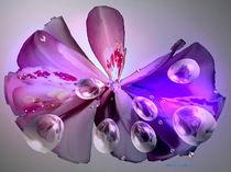Orchidee in ihrer Schönheit von Gabriele Nedilka