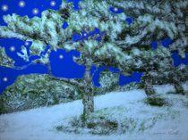 Winternacht von Gabriele Nedilka