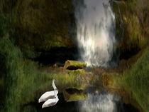 Schwäne im Wasser von Gabriele Nedilka