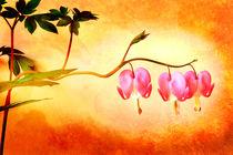 Herzblüten von Gabriele Köder - Bercher