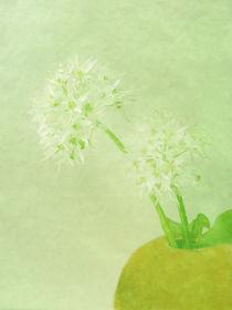 Bärlauchblüten I by Gabriele Köder - Bercher