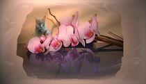 Orchidee-Katzenliebe by Gabriele Nedilka