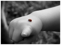 Ladybug visitor - Marienkäferbesuch by mirjam-otto-bildwerk