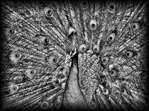 Peacock in Black and White von mirjam-otto-bildwerk