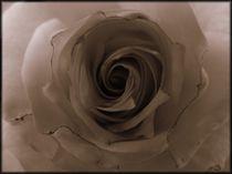 Black Rose by mirjam-otto-bildwerk