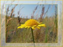 Yellow Beauty by mirjam-otto-bildwerk