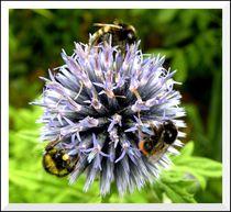 Eine Blume für drei von mirjam-otto-bildwerk