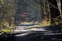 Waldweg by michas-pix