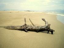 Treibholz by michas-pix