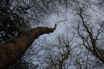 Schlangenbaum by michas-pix