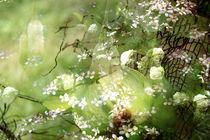 Garten der Versuchung by Scheuer Alois