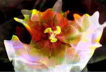 Pflanzenklang by Scheuer Alois