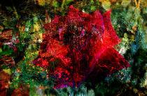 Gedanken eines Rosenzüchters