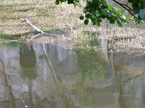 Wasserspiegelung- Die dunkle Seite im Wasser von Christa Raatz