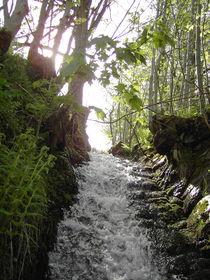 Waldflüsschen by Thomas Peter
