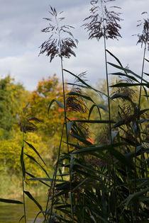 HerbstUfer by leonardofranko