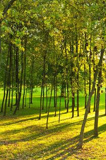 Herbstfrische von leonardofranko