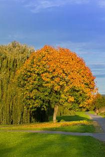 Herbstimpression von leonardofranko