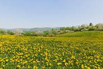 Frühlingsfrische von leonardofranko