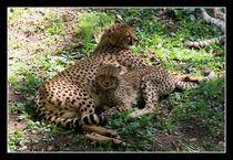 Gepard by mat