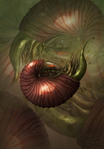 Nautilus  by Franziska Franke