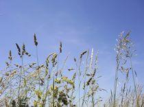 Gras eins im Goldenen Grund von Ottmar Gebhardt