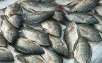 Frische Fische von Georg Portet