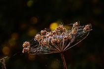 Herbstlicht von blickpunkte