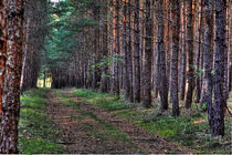 Waldweg von watzmann