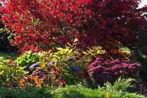Colors in the garden von watzmann