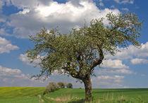 Frühlingslandschaft von watzmann