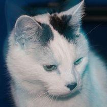 Weiße Katze von Christine Bässler