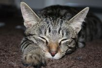 Katze schlafend by Christine Bässler