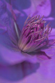 'Clematis lila' von Christine Bässler