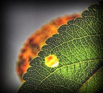 Herbstlauern von allrounder