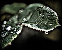 Rosenblatttropfen I von allrounder