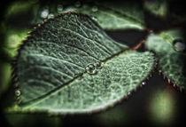 Rosenblatttropfen II von allrounder