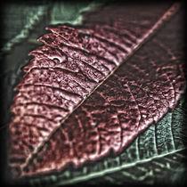 Das rostrote Blatt von allrounder