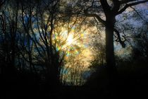 Abendwald von Cloude Vigal << Grafiknaturearts