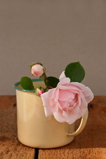 cup of roses II by pichris