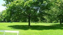Im Schatten des Baumes by fotozukunft