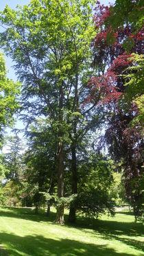 Bunte Bäume by fotozukunft
