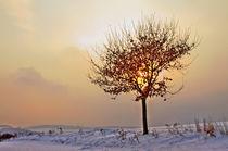 Winterabend; Landschaft by moqui