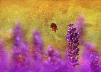 Summsel im Lavendelhain, Sommer by moqui